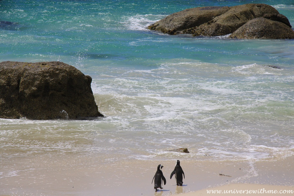 Capetown042