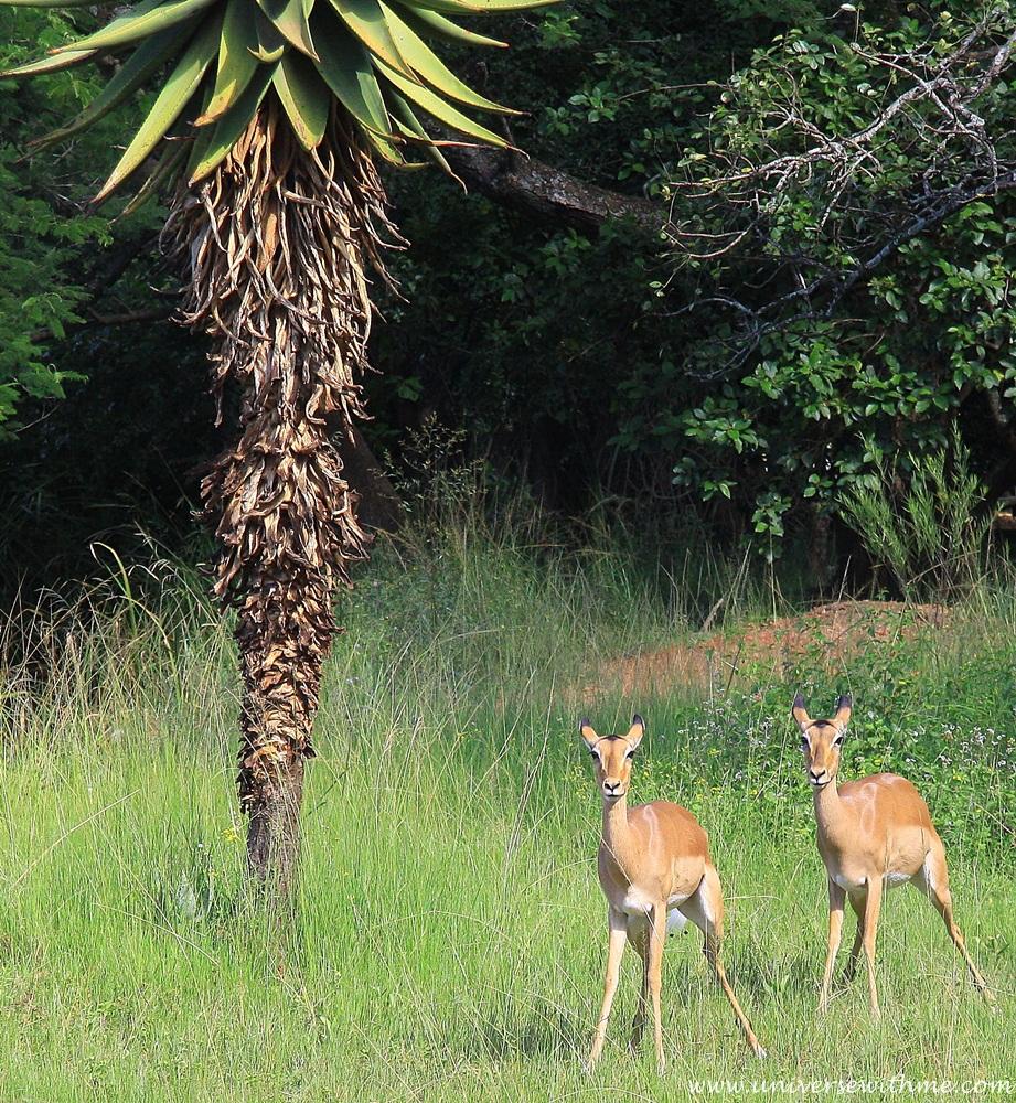 Swaziland023