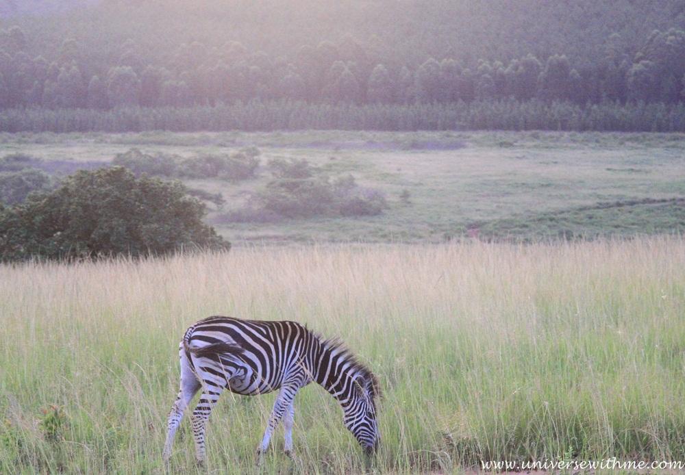 Swaziland033