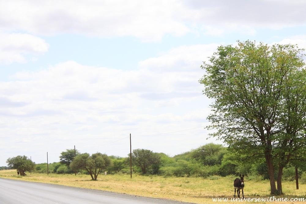Botswana209